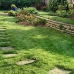 consoude au jardin