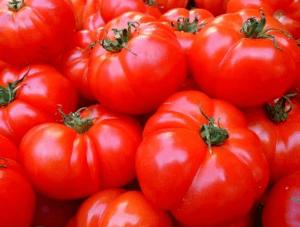 Tomates sans mildiou