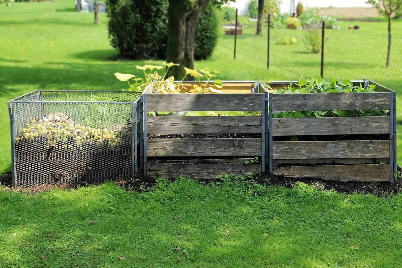 le compost nourrit la consoude