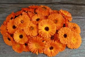 fleurs de soucis et xanthophylle
